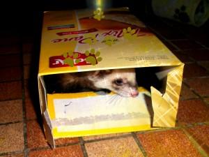 carton de farine pour furet