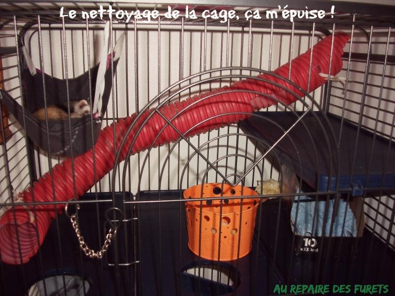 photo de cage de furet