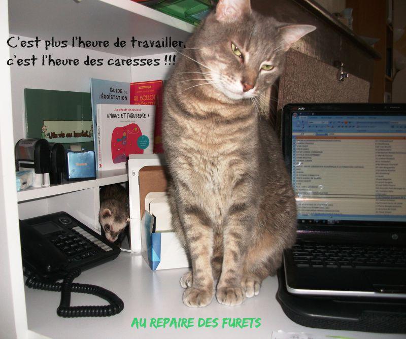chat qui veut travailler