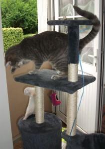 Arbre a furet et arbre a chat