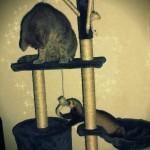chat et furet sur arbre a chat