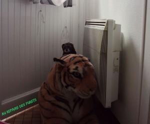 Barney a dompté un tigre