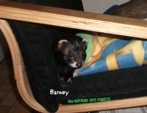 Barney en pension au Repaire des Furets