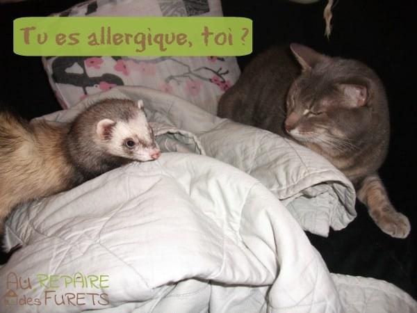 allergie aux poils de furet