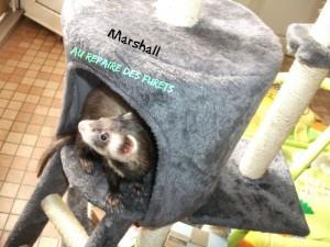 Marshall dans l'arbre a chat