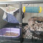 habitat du furet en cage