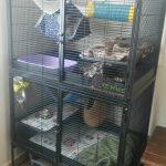 grande cage pour fufus