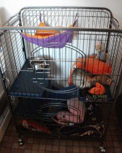 cage deux étages furet