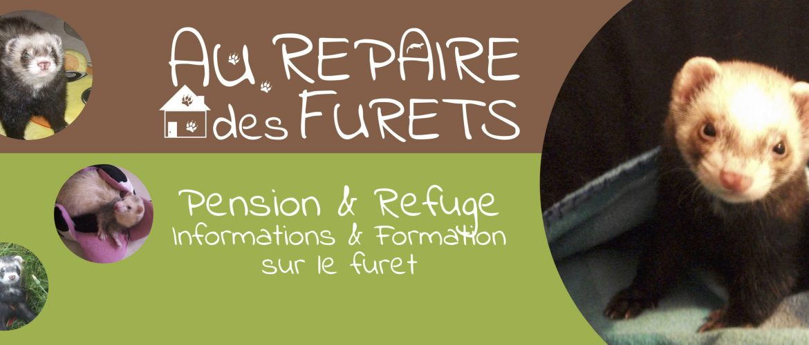 Pension et refuge pour furets en France
