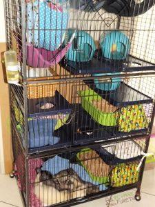cage perfect pour furets