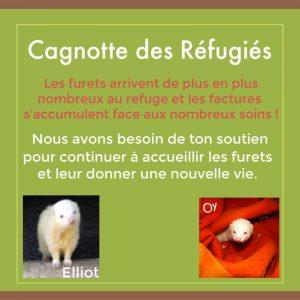 aider les furets du refuge