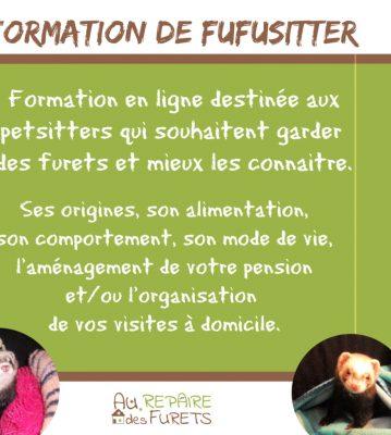 Formation de Petsitter pour furets ou Fufusitter