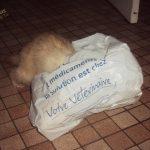 le furet champagne qui joue dans un sac plastique