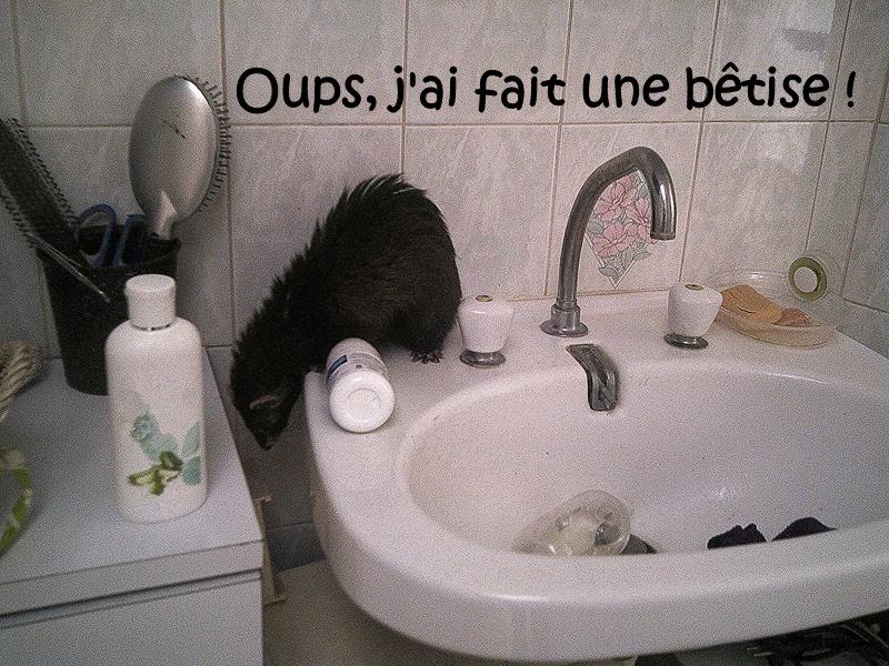 Furet qui fait tout tomber dans le lavabo