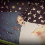 furette qui dort en surveillant son repas